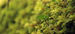 Quel est le lien entre écologie et entreprise ? Tout n'est qu'écosystème